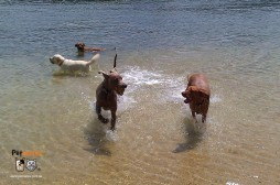 keep your dog cool in summer