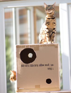 Cat on moving boxes